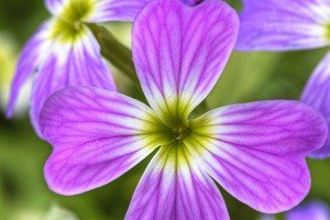fleur-resultat1-300x200