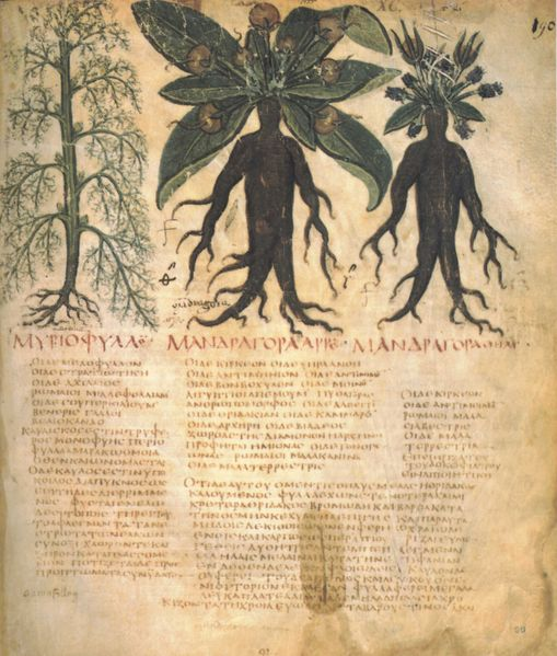 mandragore21 dans La bible, Léa, Rachel et la Mandragore
